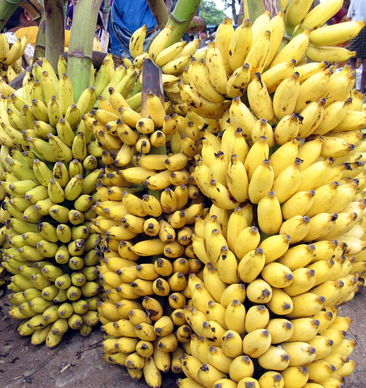 Google Image Result for http://upload.wikimedia.org/wikipedia/commons/5/56/Banana_bunch_India_Tamil_word_15.jpg