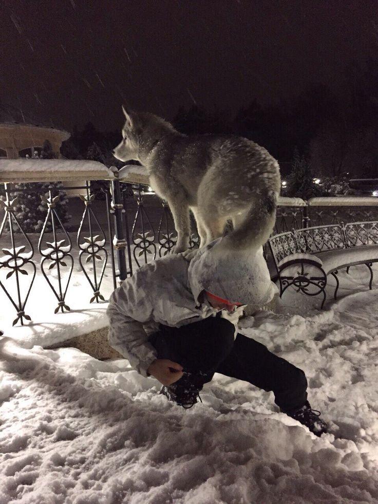 Танцы с волками)