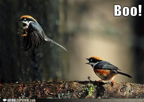 Funny Animal Captions - Did I Scare You?