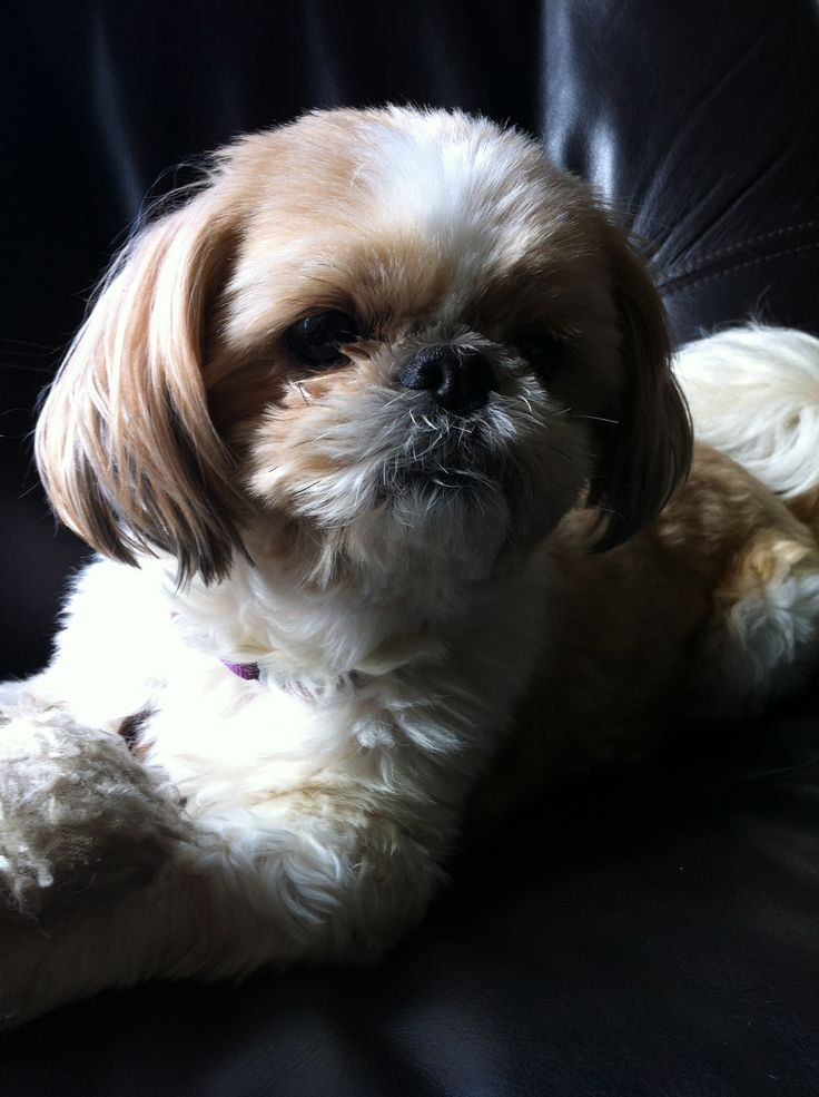 Lili. Photo taken by Sophie Abbott-Strugnell