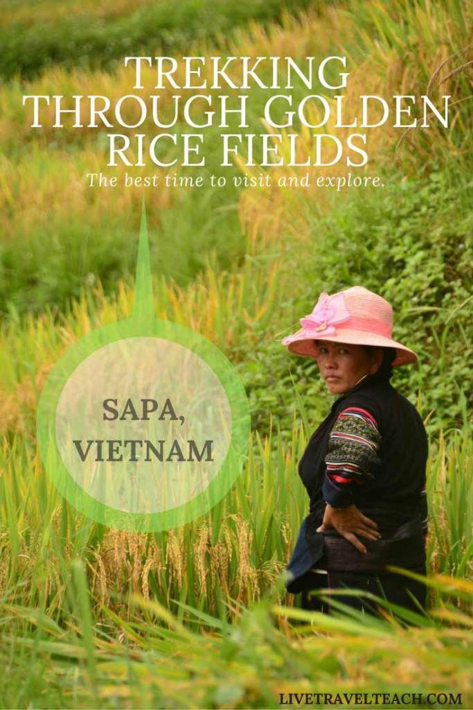 Have you ever wanted to #trek through the most beautiful #landscapes on #Earth?  Well you should head to #Sapa #Vietnam during harvest season!  This article tells you the #best times to #explore the beautiful farmland, meet the locals and experience everything that #outdoor #nature lovers want on their #vacation.  Perfect for hiking or just relaxing with a good book!