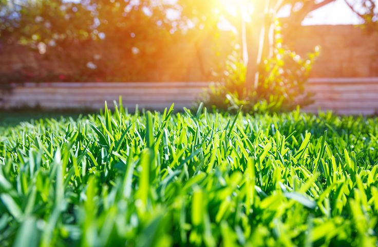 Find out how to tell if your lawn has any of these grass problems, and how to fix it. From Dirt Cheap, grass seed delivery in Kitchener.