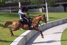 Houston Mounted Patrol.....all 40 horses barefoot and thriving
