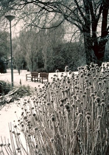 167 best images about piet oudolf gardens on pinterest for Garden design winter 2018
