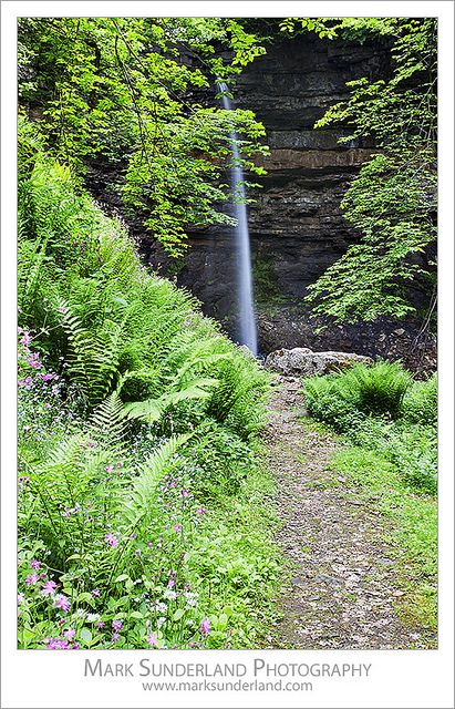 Forest Ferns and Flowers by the Path at Hardraw Force in Wensleydale Yorkshire Dales England | Flickr - Photo Sharing!