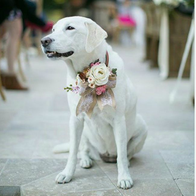 Expert advice on preparing your pup for your big day.