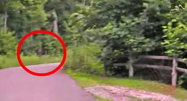 New Bigfoot Footage: This Bigfoot Sighting From Washington Looks Legit (VIDEO)