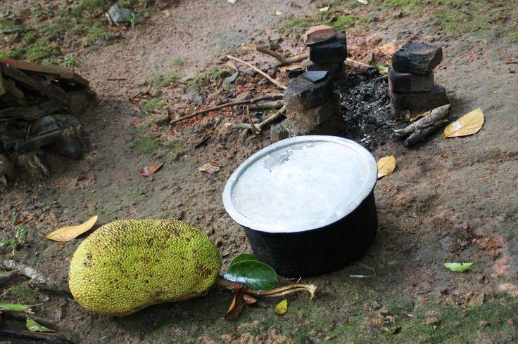 kos, bij HomeStay Srilanka