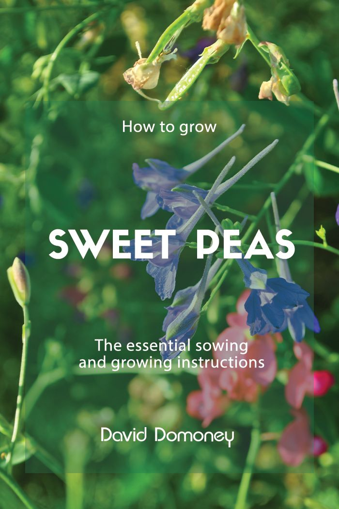 You Searched For Sweet Peas David Domoney
