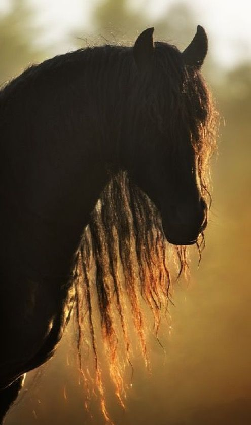 reminds me of Cas Ole from Black Stallion