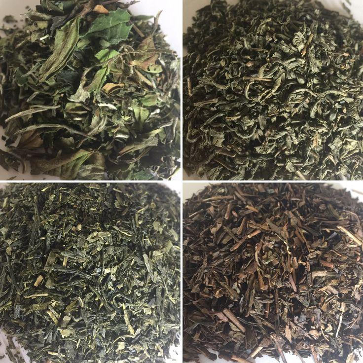 White tea among green teas