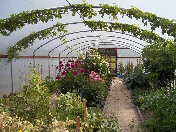 Contemporary Garden Ideas 2014 The Polytunnel In June Winter Greenhouseallotment Ideasindoor Gardeningvegetable On Decorating