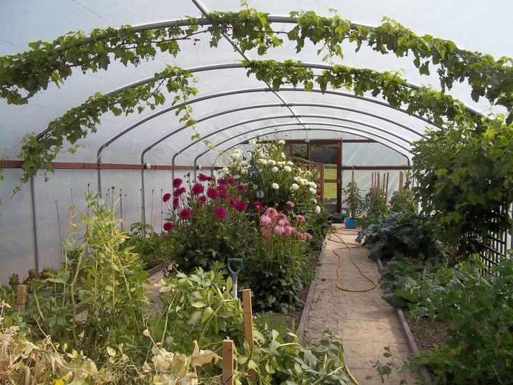 View down the polytunnel in June 2014