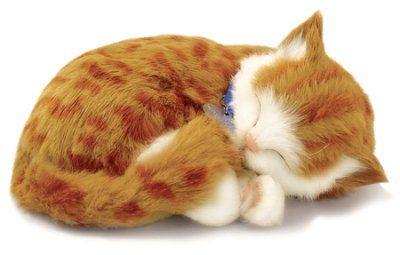 Huggable Pet, Cat, Orange Tabby