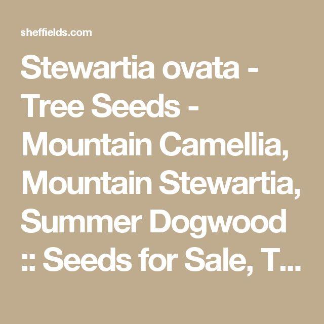 Stewartia ovata - Tree Seeds - Mountain Camellia, Mountain Stewartia, Summer Dogwood :: Seeds for Sale, Tree seeds, Shrub seeds, Flower seeds, Vine seeds, Herb seeds,Grass seeds, Vegetable seeds
