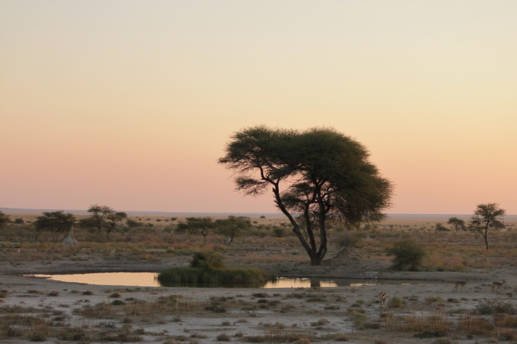 Sundowners at a local water hole.