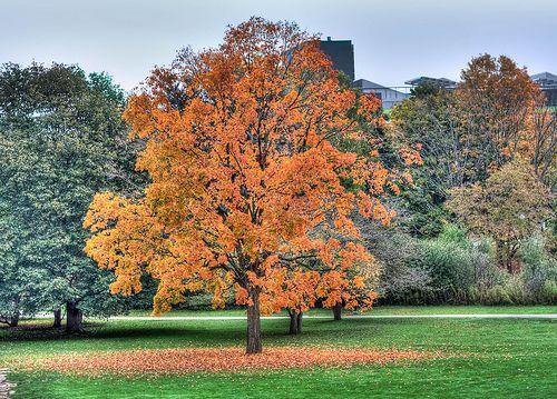 Autumn, University of Waterloo