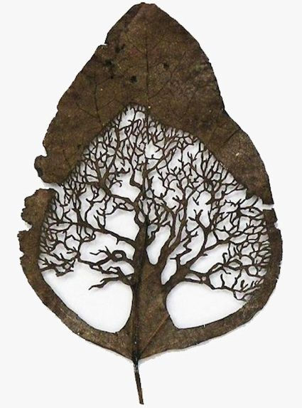 Lorenzo Duran uses fallen leaves as canvases. Before he begins work on a leaf, he first carefully washes, dries, and molds the leaf into a stable form. Then, with surgical precision, he cuts out nature-inspired motifs.    Such detail within a very fragile surface!