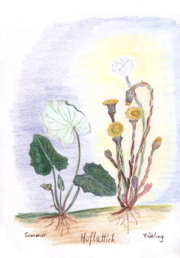 libro de lecciones de botánica en la Escuela Waldorf de Cornelius Ries