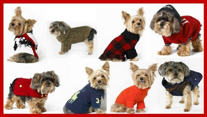 roupa-cachorro