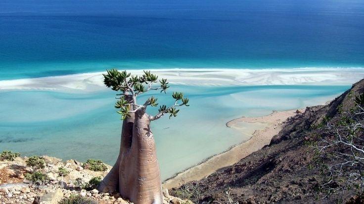 Остров Сокотра - Путешествуем вместе