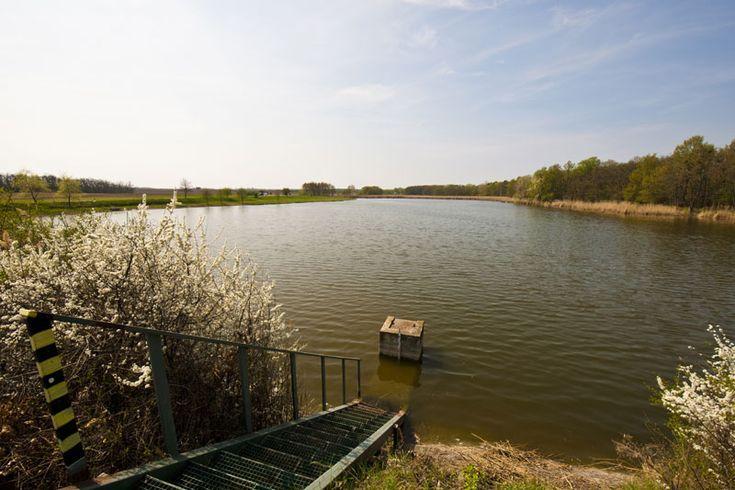 Francis pond (Františkův rybník) - Francis pond (Františkův rybník)is located in the beautiful countryside of the Lednice - Valtice. It is very well stocking trophy carp, sever... Check more at http://carpfishinglakes.com/item/francis-pond-frantiskuv-rybnik/