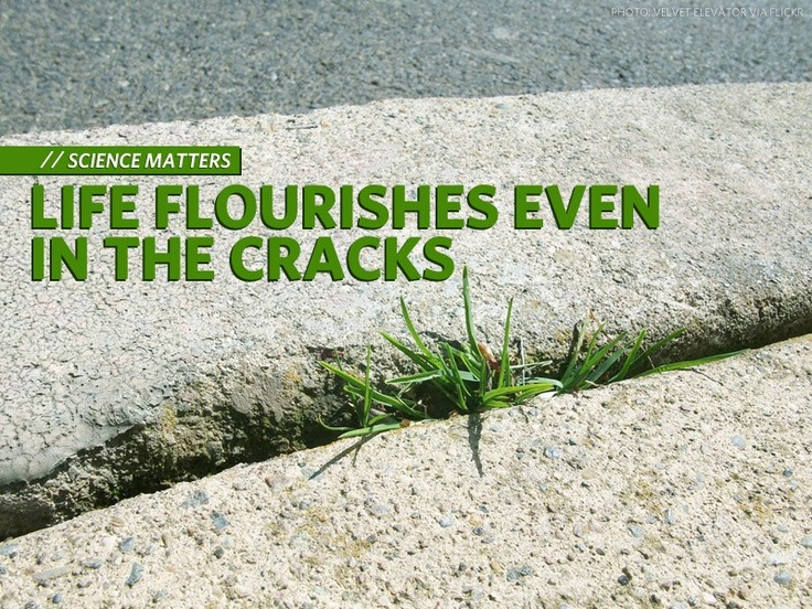 Have you ever thought about the grass that grows in sidewalk cracks? These hardy plants are generally written off as undesirable.    Next time you go out for a walk, tread gently and remember that we are both inhabitants and stewards of nature in our neighbourhoods.    http://www.davidsuzuki.org/blogs/science-matters/2012/11/life-flourishes-even-in-the-cracks/