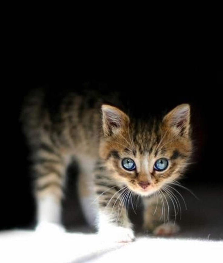 How's this for a super cute kitten picture?