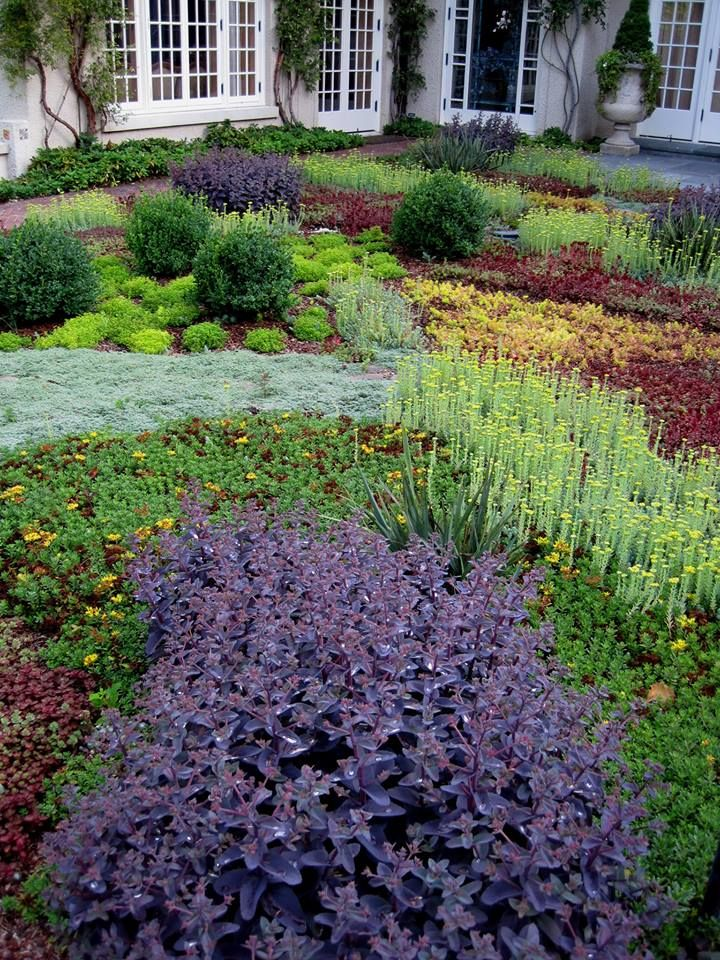 Low growing sedum thyme and other ground cover plants for Front garden plants