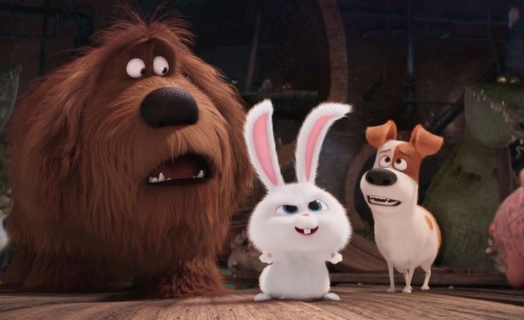 87 best movie the secret life of pets images on pinterest secret life of pets the secret. Black Bedroom Furniture Sets. Home Design Ideas
