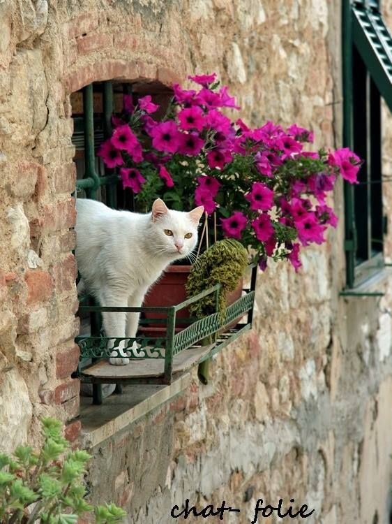 White cat checking the outdoors... Probably looking for birds.