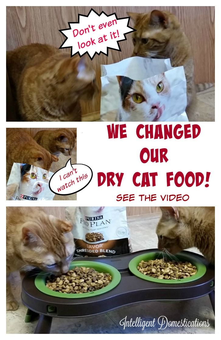 We Changed Our Dry Cat Food! The reaction of our cats was a big surprise for us. Are you like us, looking for a more healthy cat food?