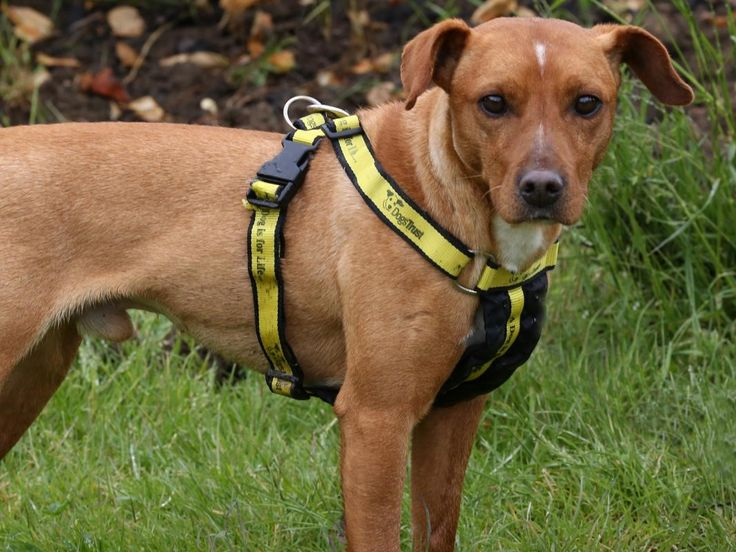 Winston Dogs Trust (With images) Dogs, Dog adoption
