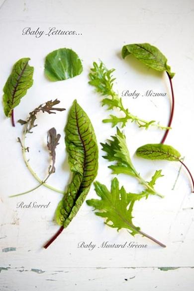 Collect° Lettuce by Nicole Franzen #insalata