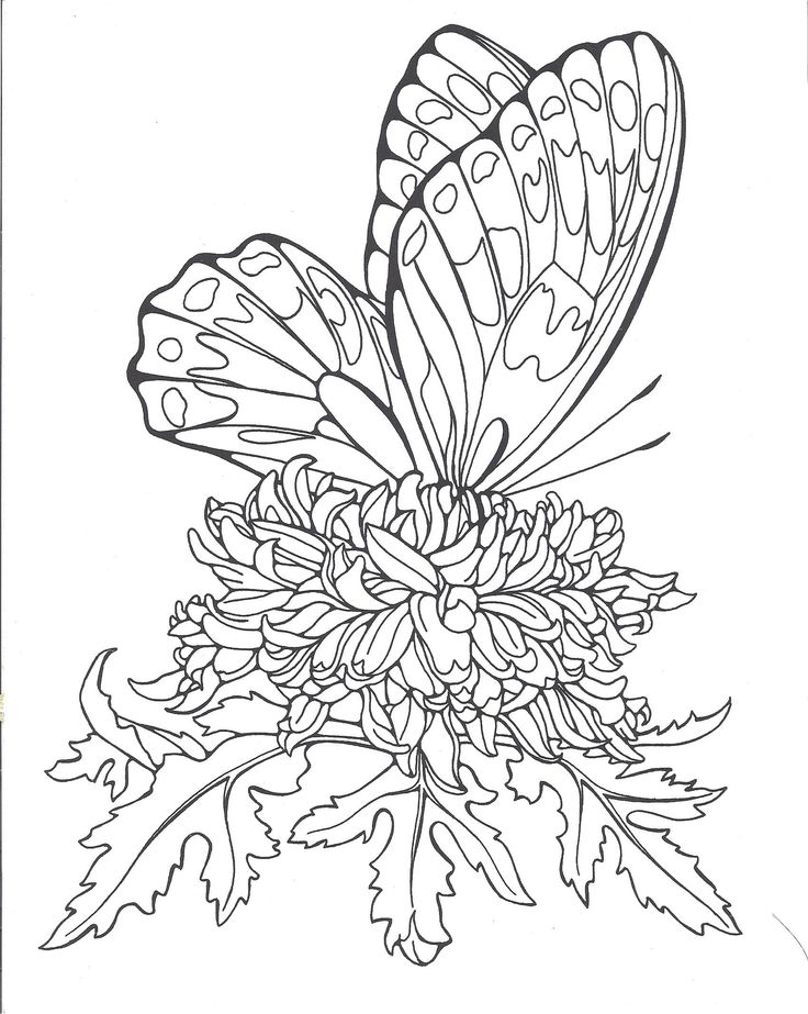 Butterflies ruth heller adult coloringcoloring pagescoloring booksview