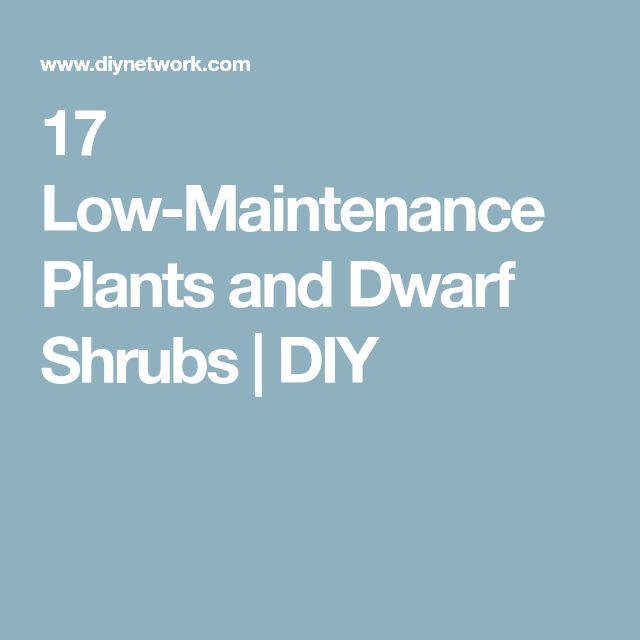 17 Low-Maintenance Plants and Dwarf Shrubs | DIY
