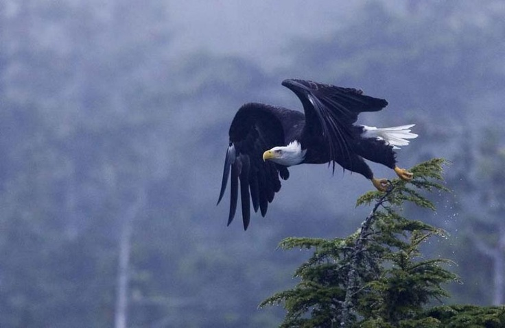 Jamies Whale Watching Tofino BC Canada : Paddle with Eagles