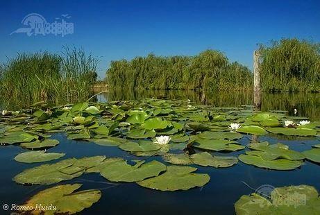 1 Septembrie 2015- Ziua Rezervaţiei Biosferei Delta Dunării