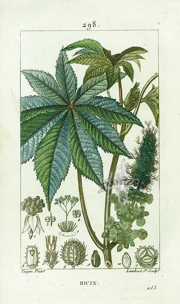 Turpin Botanical Prints
