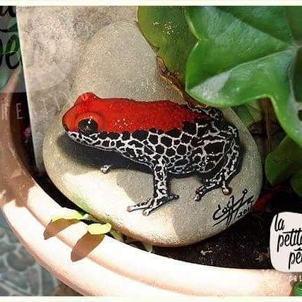 """Sapito"" Acrilico sobre piedra #lapetitapetra #handmade #pinturaenpiedra #stoneartist #frog #rock #stone #quito #ecuador"