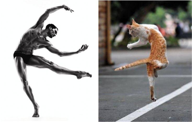 Des Hommes et des Chatons: Photo. Danse, pas de chat.