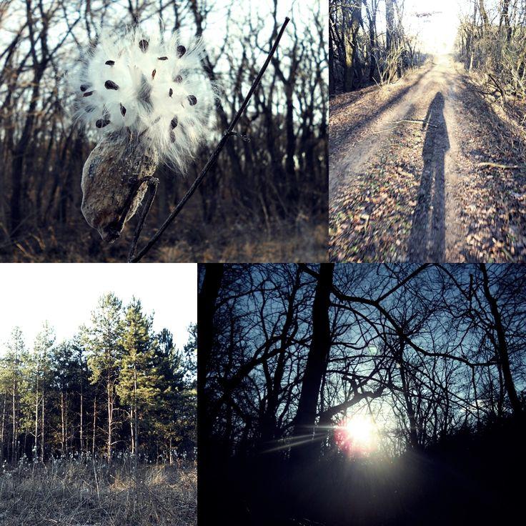 winter forest Photo: Beata Bauer