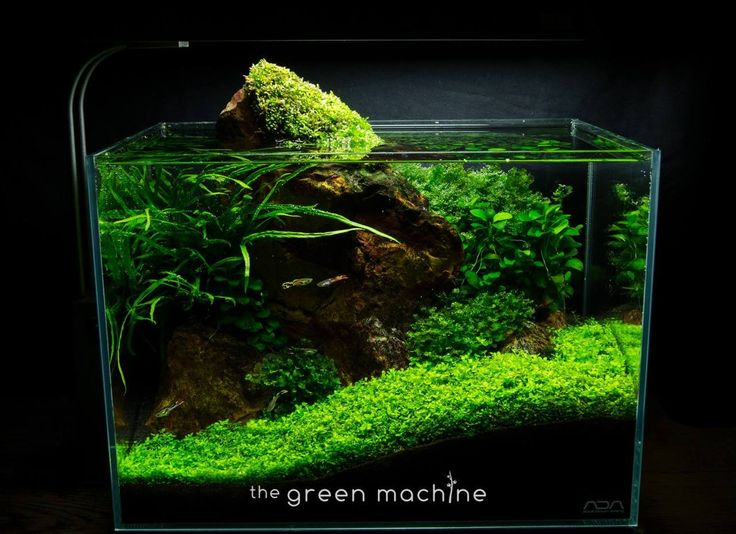 James Findley New nano set up by James Findley for The Green Machine ...