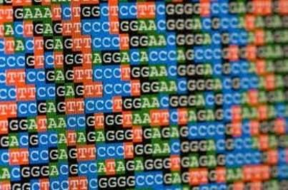 In June 2013 SCOTUS ruled in Assoc. for Molecular Pathology v. Myriad Genetics that claims for isolated DNA sequences are NOT patent-eligible subject matter under 35 U.S.C. §101, but claims for *complementary DNA (cDNA) sequences are patent-eligible under the statute.  Specifically, the Court held that naturally occurring DNA is a product of nature and cannot be patented merely because it has been isolated; but, cDNA can be patented if it has been *synthetically created and occurs…