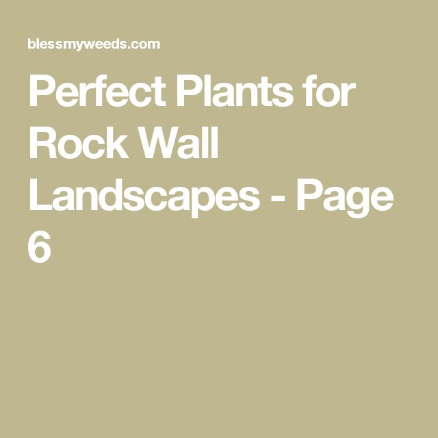 Perfect Plants for Rock Wall Landscapes - Page 6