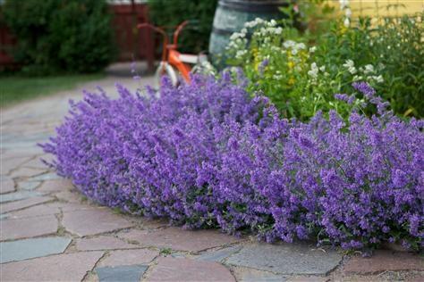Trädgården består av väggar, golv och tak. Alla delar är viktiga för helheten och känslan. Trädgården behöver en övergripande arkitektur, en grön stomme av träd, buskar och häckar som skapar rum och bildar bakgrund till prydnadsväxterna, sittplatserna och annat som man vill få plats med.