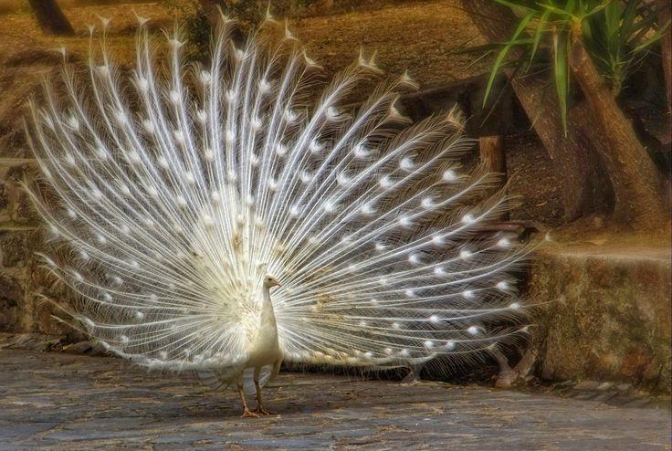 *** karşıLama ***: fugler som er truede og fredede