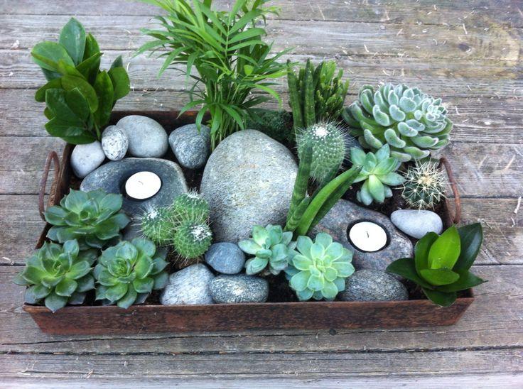 Grønne sukkulenter i stuen