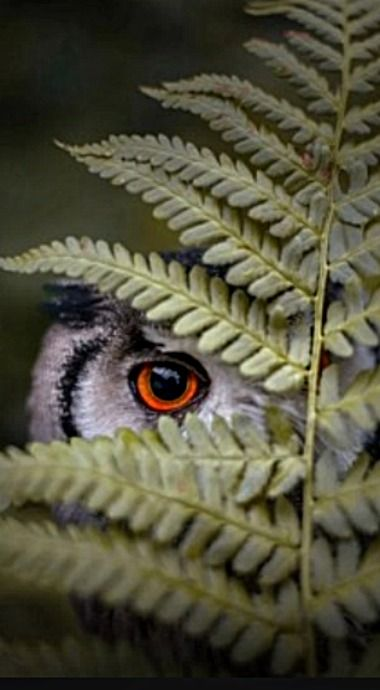 Spying on you...