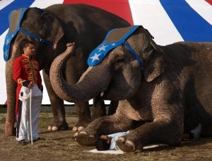 No animal should have to suffer for our entertainment - Take a stand for elephants and other animals like them that are facing cruelty in the circus.: Wilde Dieren, Helpful Hints Pets, In Of, Circus Gewenst, Animal Welfare, Eläimet Viihteessä, Animals,  And, Op Wilde